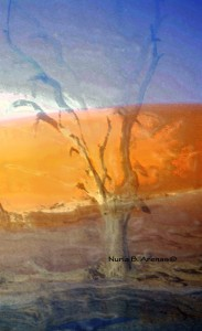 "Life in ""Dead Vlei"" by Nuria B. Arenas©"