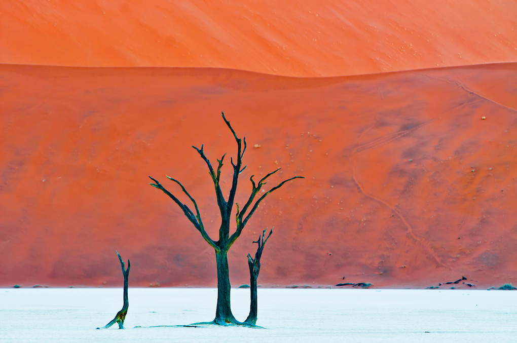 One Namib to Dali NuriaBlancoArenas©